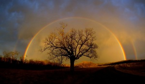 rainbow_elam_cr_1